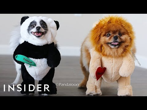 Turn Your Dog Into A Walking Teddy Bear