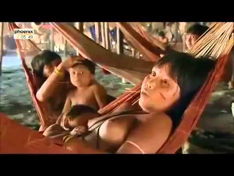 Case Study Yanomami and the Evolution of a Culture
