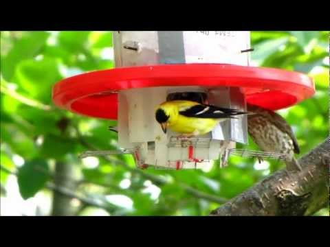How to make a squirrel-proof bird feeder