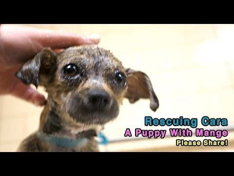 Rescuing Cara - A Puppy With Demodectic Mange - PLEASE SHARE