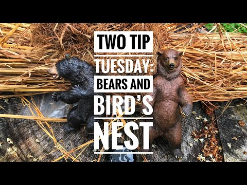 Two Tip Tuesday: Bears and Bird's Nest