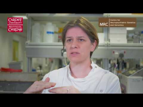 How we extract DNA from blood samples