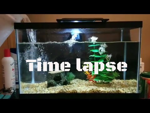 CLEANING A BETTA FISH TANK : TIME LAPSE  2017