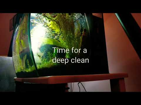 How to do a water change/deep clean. Dwarf Puffers Tank.