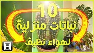 #x202b;افضل نباتات الزينة للحصول على هواء نظيف في المنزل#x202c;lrm;