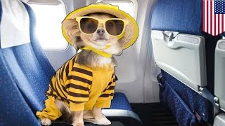 Service and emotional support animals: Stop with the phony service pets on planes - TomoNews