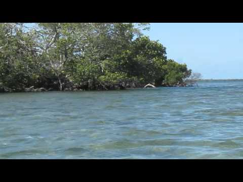 Key West Kayaking and Snorkeling Trip