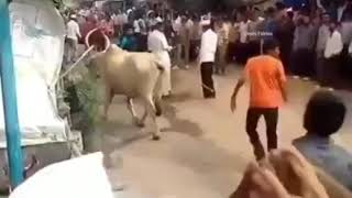Top funny videos of 2019