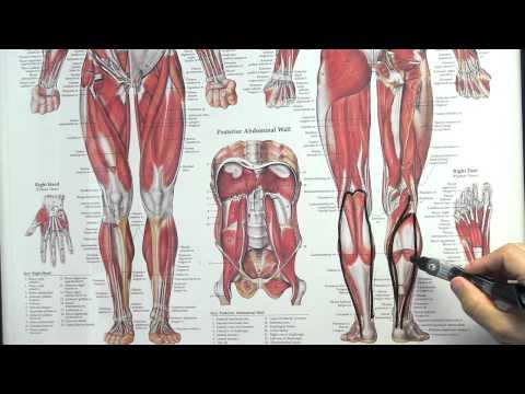 Airrosti Treatment: Calf Pull/Strain