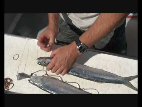How to rig a Wolf Herring for Spanish Mackerel fishing!!