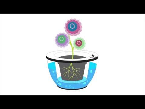 Self Watering Wonder Planter