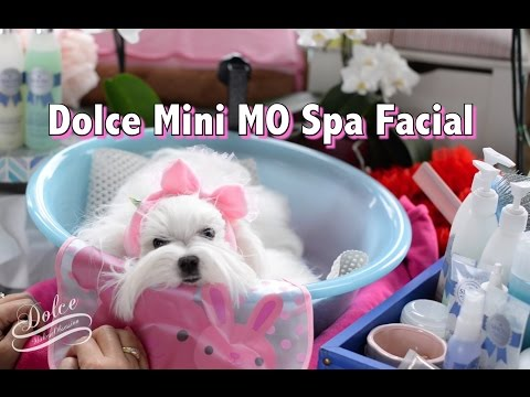 GROOMING FACE: Maltese Face Cleaning &Tear Stain Cleaning ~ Cleaning Tear Stains for Maltese 말티즈미용