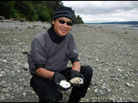 Harvesting Oysters (for Dummies!)