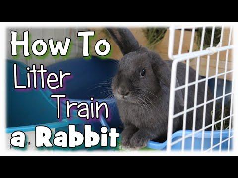 How to Litter Train a Rabbit