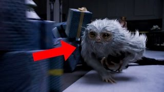 Identifying the Creatures of Fantastic Beasts And Where To Find Them Trailer