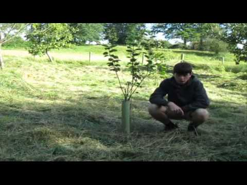 5 Great Ways to get MORE Fruit from your Fruit Trees