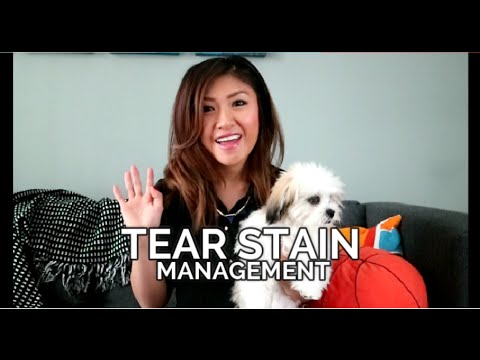 Tear Stain Management