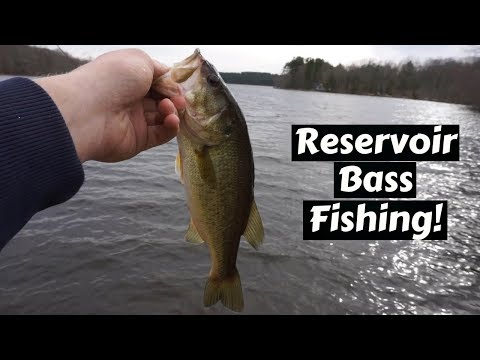 Fishing For SCHOOLING Bass From The SHORE!