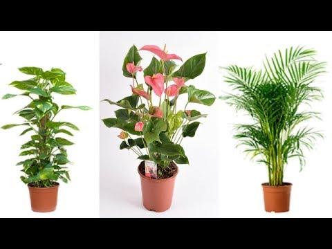 5 Reasons Of Having Plants In Your House Can Change Your Life