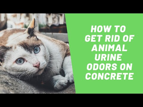 SOS Odours | How to Get Rid of Animal Urine Odors on Concrete