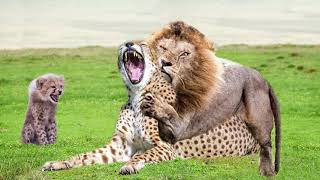 Power of Lion King! Mother Cheetah Don't Save Her Baby From Lion Hunting - Python, Crocodile vs Lion