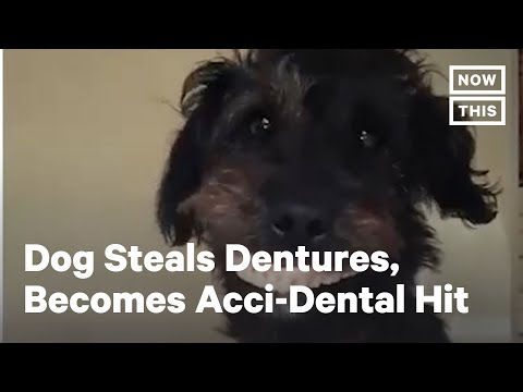 Denture-Stealing Puppy Becomes Internet Sensation | NowThis