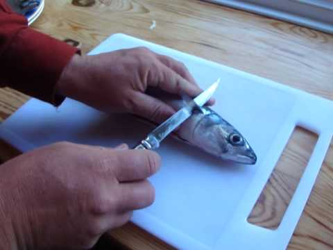 Opinel slimline filleting knife boning out fresh mackerel