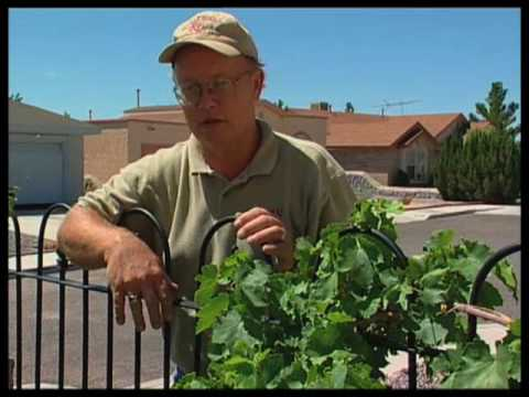 How To Identify And Control Garden Pests On Grapes And Roses
