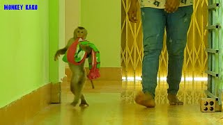 Adorable Monkey, Clever Kako Carrying Towel Go To Taking Bath And Body Massage