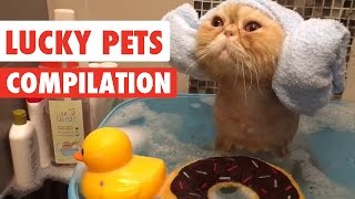 Lucky Pets Video Compilation 2017