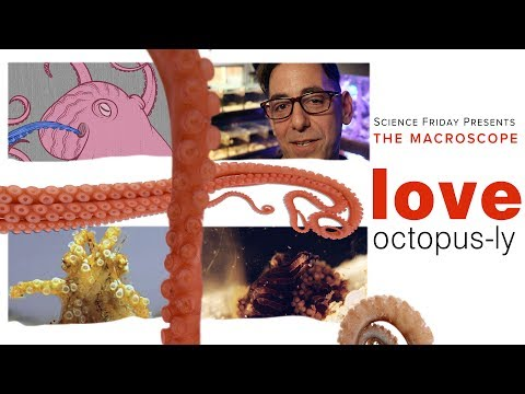 Love, Octopus-ly