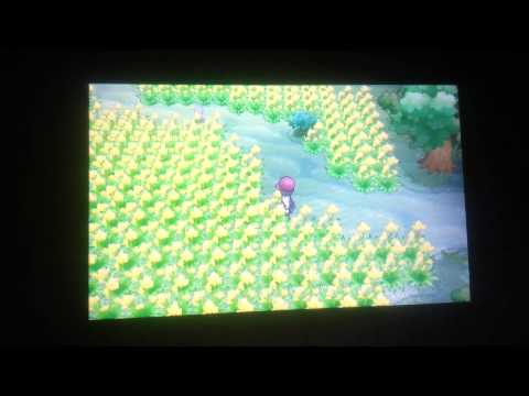 How to find ditto in pokemon X and Y