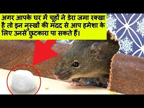 चूहों को घर से भागने के सबसे असरदार नुश्खे। How To Get Rid of Rats / Keep Rats Away