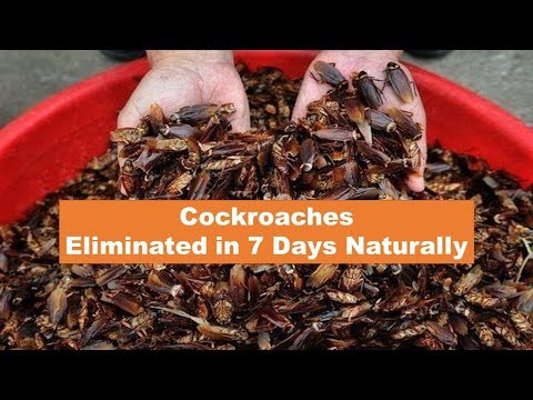 How to Get Rid of Cockroaches Permanently in 7 Days Naturally | Remove Roaches from Home