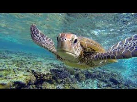 The Great Barrier Reef Australia  - Underwater Great Barrier Reef Video HD