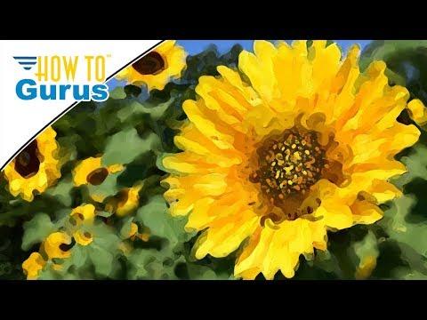Photoshop Elements Impressionist Brush: Impressionistic Painting in 2018 15 14 13 12 11 Tutorial