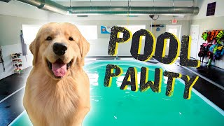 Throwing My Dog a Pool Party