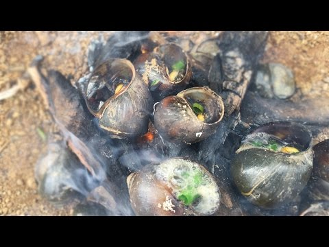 Servival Life: Finding and Cooking Snail