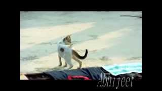 Angry desi cat fighting ......... on roof