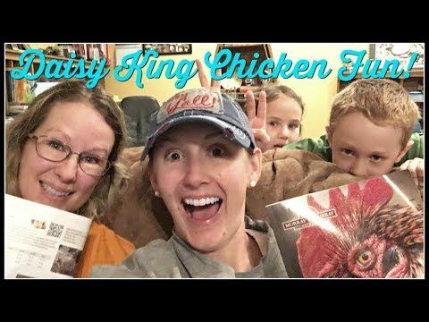 Daisy King Chicken Fun!