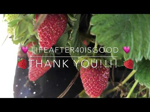 THE Best Way to Grow Strawberries