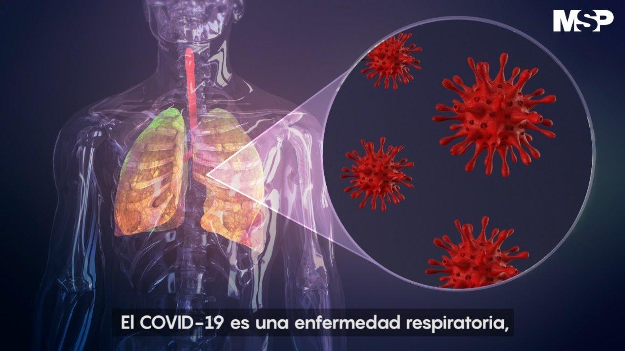 Así ataca el #coronavirus al cuerpo humano