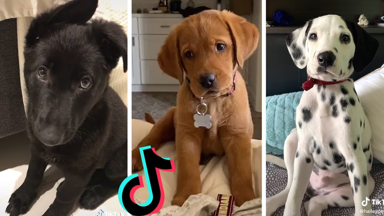 Dogs Doing Funny Things Tik Tok ~ Cutest Puppies TIKTOK Compilation  ~ Fluppy ~ 2020