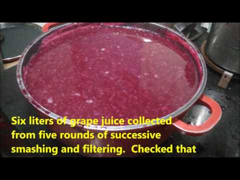How I made Grape Squash and Grape Juice from fresh grapes in one go!