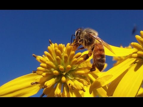 Plants And Flowers Honey Bees Pollinate