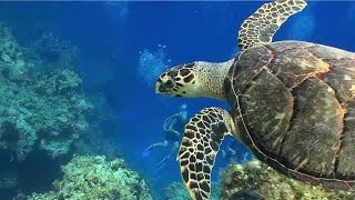 Sea Turtles Fun Facts Amazing Video