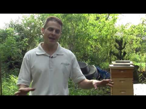 Raising Bees In Your Yard