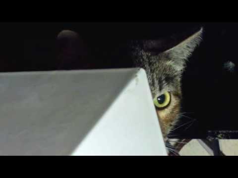 Feral Cat or Scared Cat?