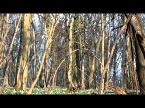 Morning In The Forest   Sound Effect 13