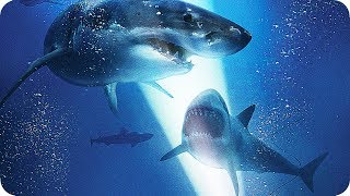 47 METERS DOWN Extended Preview | Trailer & Film Clips (2017) Shark Horror Movie